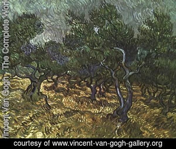 Vincent Van Gogh - The Olive Grove