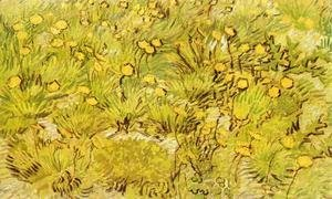 Vincent Van Gogh - A Field of Yellow Flowers