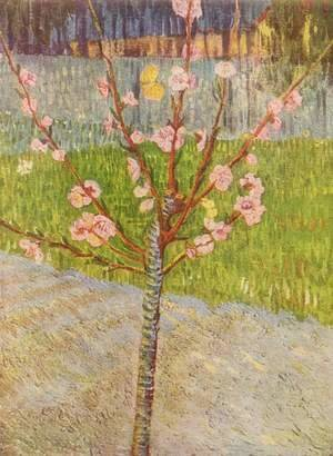 Blossoming peach tree