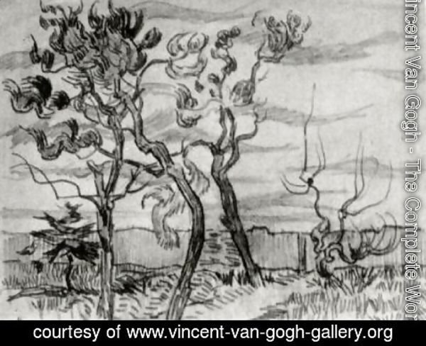 Vincent Van Gogh - Pine Trees in Front of the Wall of the Asylum