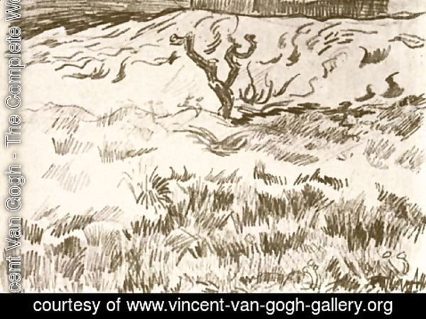 Vincent Van Gogh - Field with Bare Tree