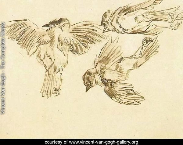 Studies of a Dead Sparrow