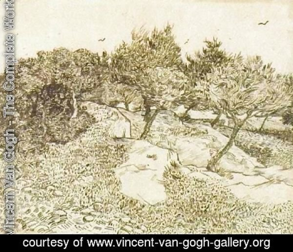 Vincent Van Gogh - The Olive Trees