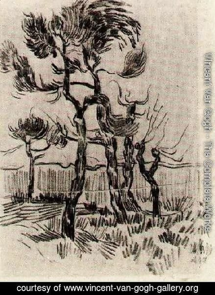 Vincent Van Gogh - Pine Trees in Front of the Wall of the Asylum 4
