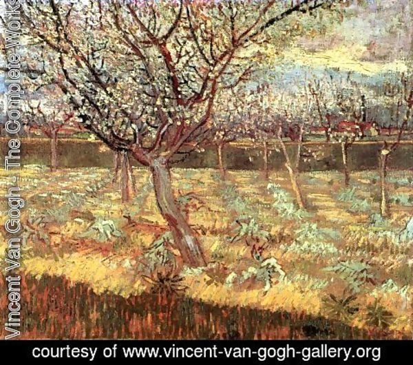 Vincent Van Gogh - Apricot Trees In Blossom II