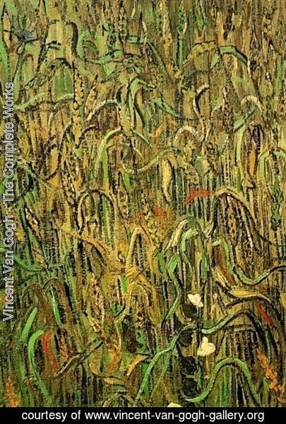 Vincent Van Gogh - Ears Of Wheat