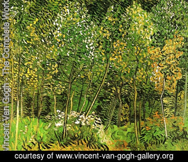 Vincent Van Gogh - The Grove