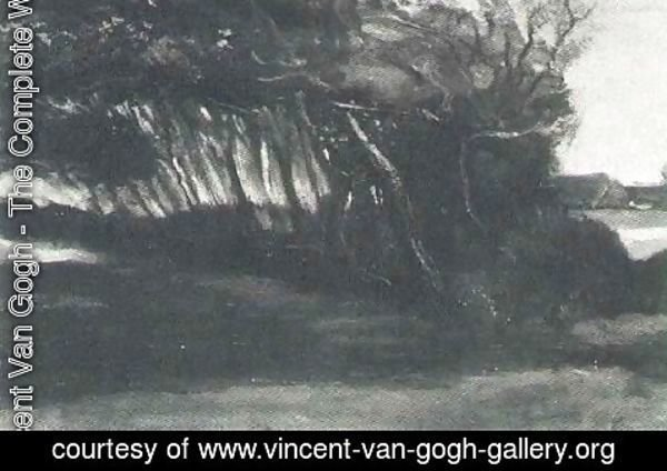 Vincent Van Gogh - Landscape With Windblown Trees