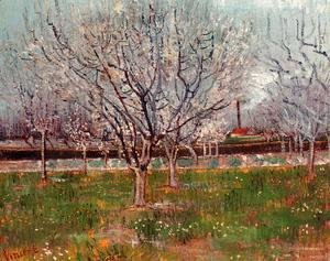 Orchard In Blossom Bordered By Cypresses