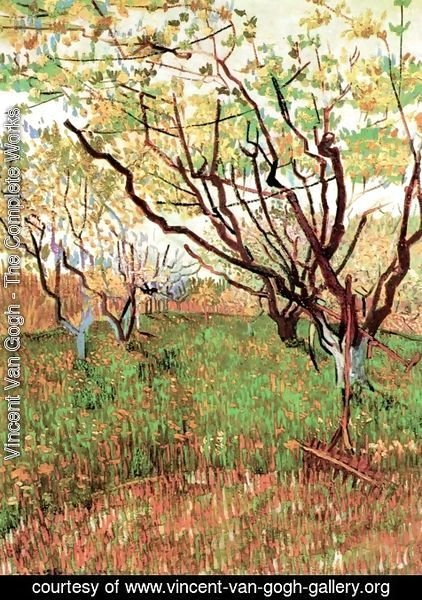 Vincent Van Gogh - Orchard In Blossom III