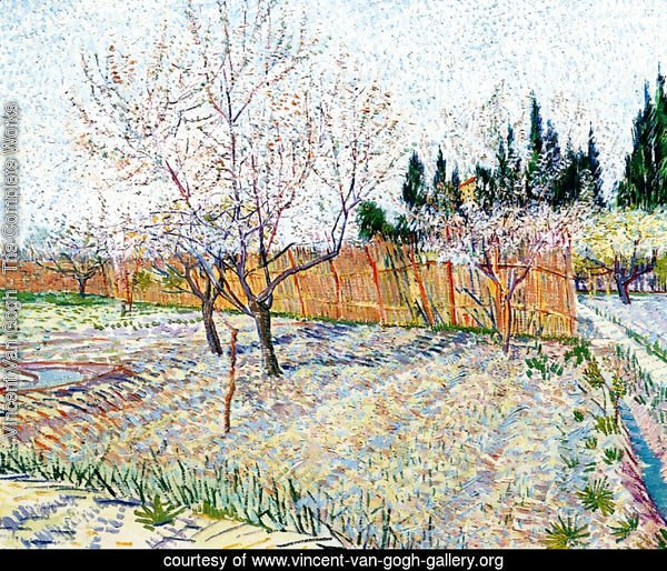 Orchard With Peach Trees In Blossom II